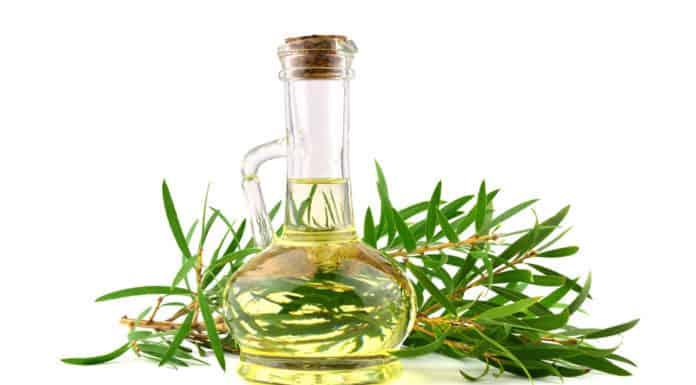 olejek z drzewa herbacianego, pękata butelka, liście, jasne tło