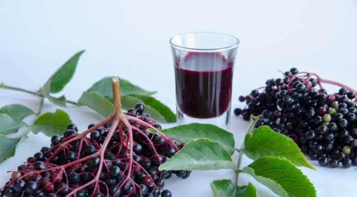 czarny bez, owoce, kieliszek, sok