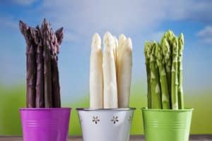 szparagi białe, zielone i fioletowe