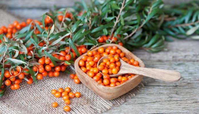 owoce i liście rokitnika