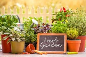 hodowla zieleniny w domu
