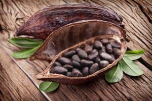 kakaowiec wnętrze