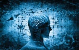 mózg człowieka, neurony